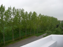 Balkon und grüner Ausblick!